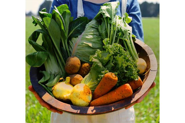 自然栽培で採れた野菜